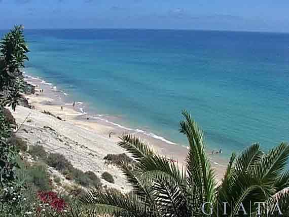 Playa de Esquinzo bei Jandia, Fuerteventura, Kanaren ( Urlaub, Reisen, Lastminute-Reisen, Pauschalreisen )