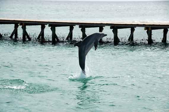 Karibik-Insel Anguilla, Delfine-Aquarium ( Urlaub, Reisen, Lastminute-Reisen, Pauschalreisen )