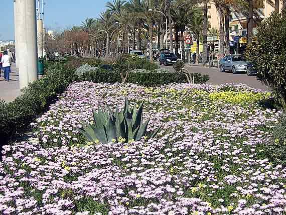 Promenade Playa de Palma, Mallorca, Spanien (Reisen, Urlaub, Lastminute)