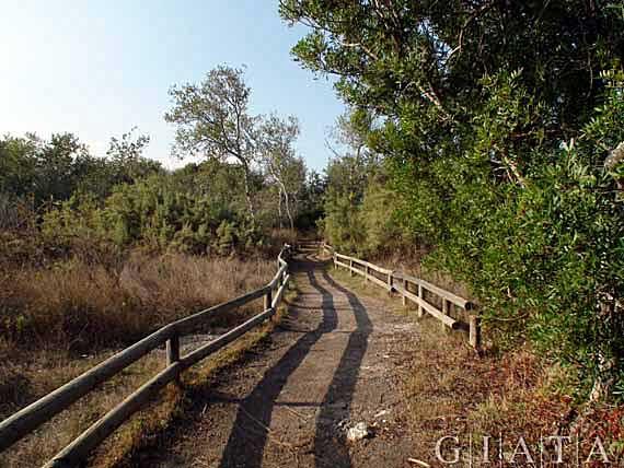 Parc natural de s'Albufera, Muro, Alcudia, Mallorca, Spanien (Reisen, Urlaub, Lastminute)