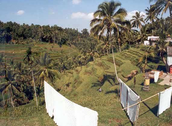 Indonesien, Bali - Landschaft (Urlaub, Reisen, Last-Minute-Reisen, Pauschalreisen)