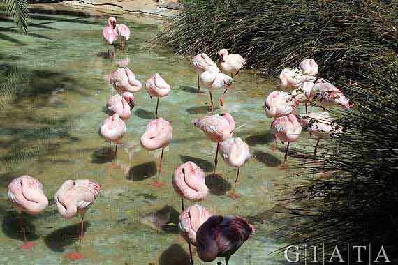 """Naturpark """"Oasis Park"""" bei La Lajita, Fuerteventura, Kanaren ( Urlaub, Reisen, Lastminute-Reisen, Pauschalreisen )"""
