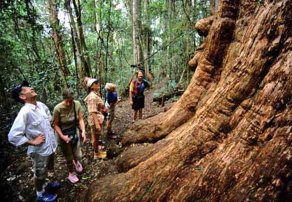 Australien, Queensland - Lamington Nationalpark ( Urlaub, Reisen, Lastminute-Reisen, Pauschalreisen )