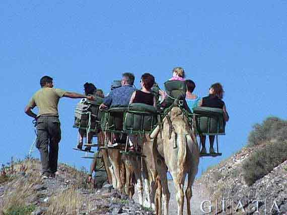 "Naturpark ""Oasis Park"" bei La Lajita, Fuerteventura, Kanaren, Spanien ( Urlaub, Reisen, Lastminute-Reisen, Pauschalreisen )"