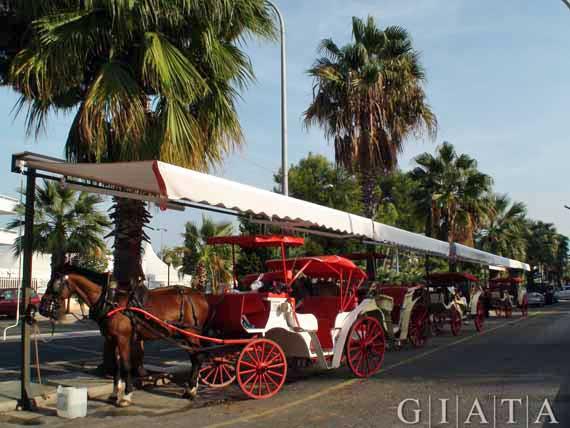 Mallorca,  Puerto de Alcudia - Pferdekutschen ( Urlaub, Reisen, Lastminute-Reisen, Pauschalreisen )