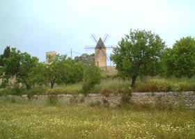 Windmühle auf Mallorca ( Urlaub, Reisen, Lastminute-Reisen, Pauschalreisen )