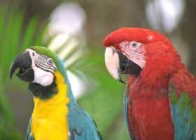 Papageien im Loro Parque, Puerto de la Cruz, Teneriffa ( Urlaub, Reisen, Lastminute-Reisen, Pauschalreisen )