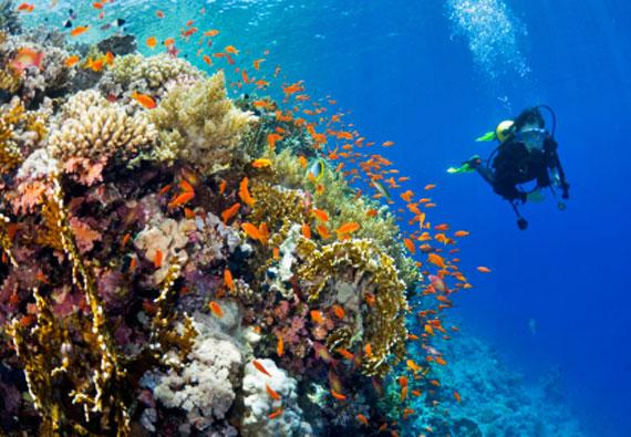Ägypten, Rotes Meer, Taucher am Korallenriff ( Urlaub, Reisen, Lastminute-Reisen, Pauschalreisen )
