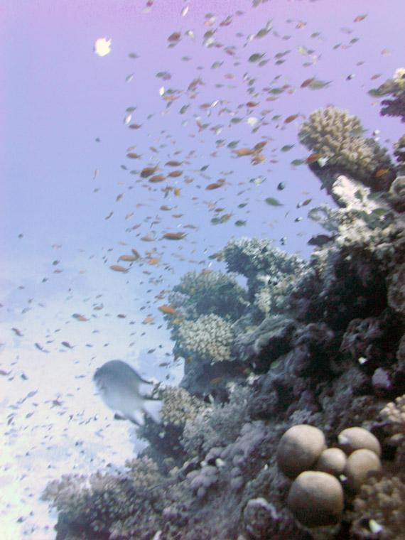 Housreef vom Brayka Bay Resort in Marsa Alam, Ägypten  (Urlaub, Reisen, Lastminute-Reisen, Pauschalreisen)