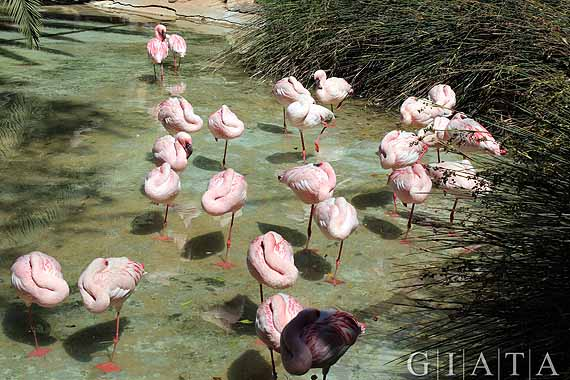 Kanaren, Fuerteventura - Oasis Park ( Urlaub, Reisen, Lastminute-Reisen, Pauschalreisen )