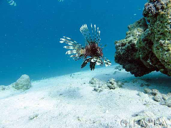 Malediven - Unterwasserwelt im Indischer Ozean ( Urlaub, Reisen, Lastminute-Reisen, Pauschalreisen )